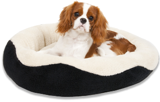 Cavalier King Charles Spaniel For Sale Houston