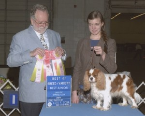 AKC Junior Showmanship