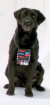 What Breed Of Dog Is Bark Vader