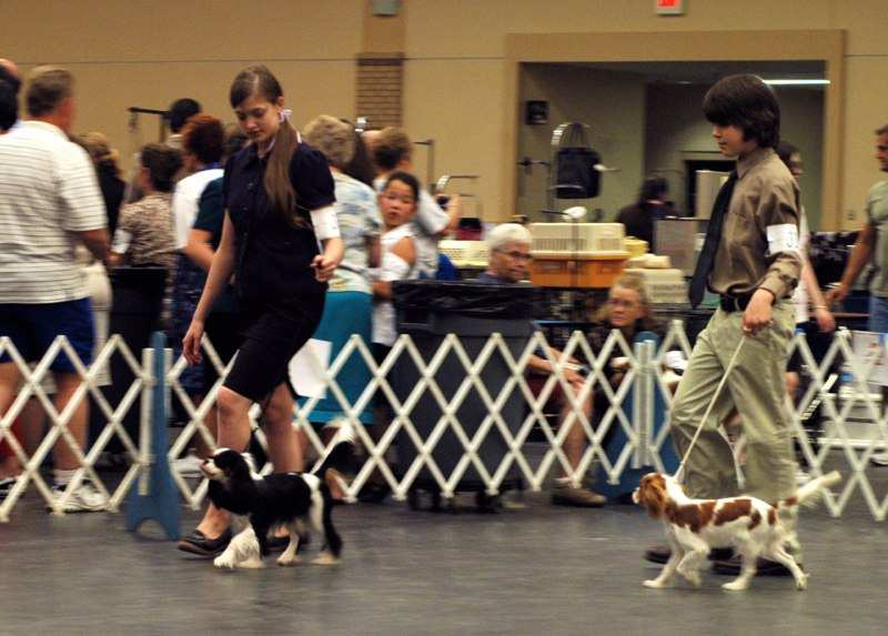 Kaitlyn & Carter in the Juniors ring with Knightley & Valentine