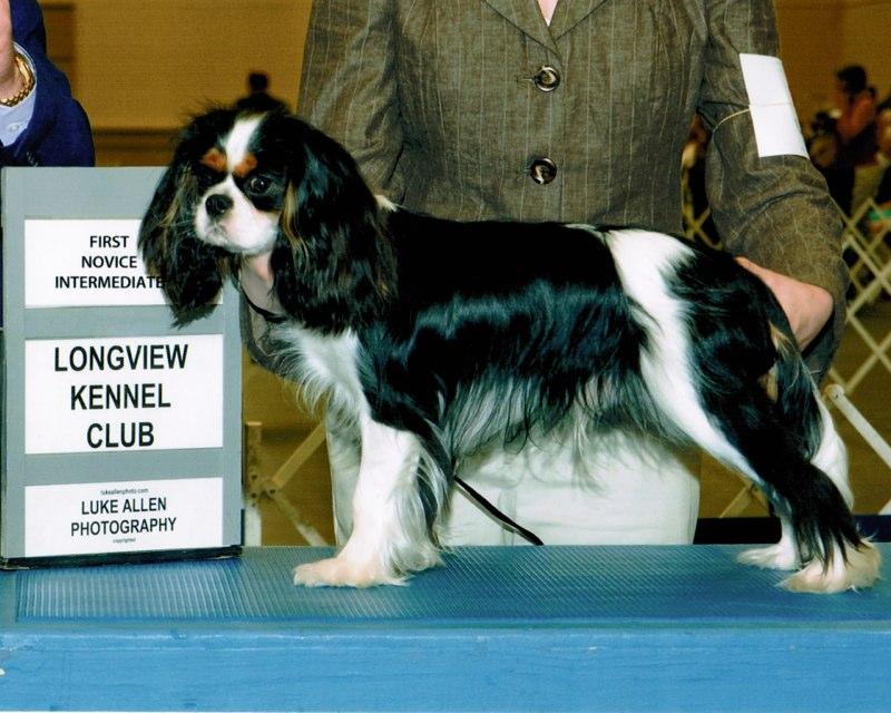 Kaitlyn's 3rd Novice Win!, Knightley first in class Longview, July 2010