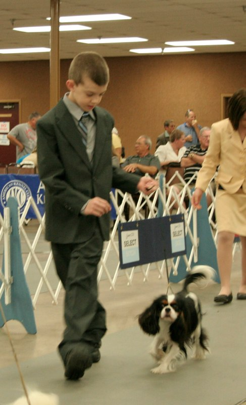Nathan showing Knightley in Junior Showmanship