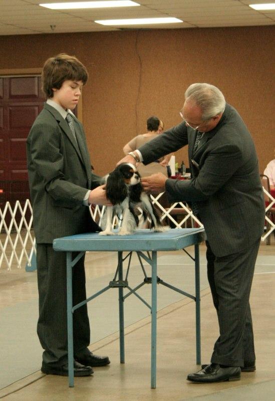 Carter showing Knightley in Junior Showmanship
