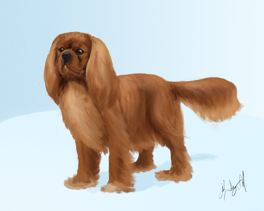 Ruby Cavalier King Charles Spaniel Painting
